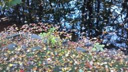 2012-10-28_15-21-16_428