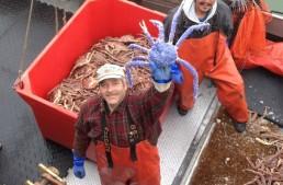 Newest blue crab